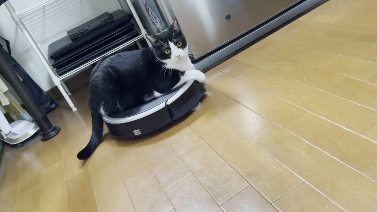 ルンバにクルクル回される重量オーバーな猫