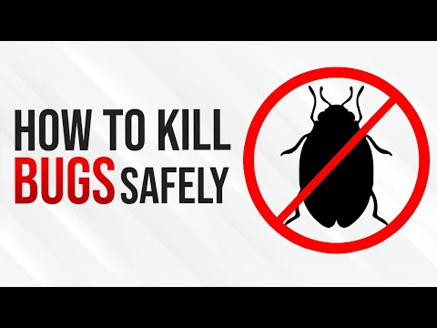 BEST BUG DEFENSE! | How to get rid of bugs in your house