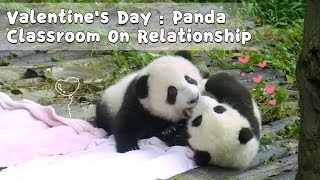 Valentine's Day : Panda Classroom On Relationship | iPanda