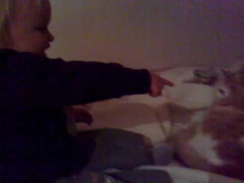 Alicia leker med bardhyls katt