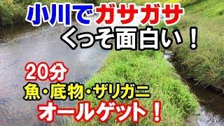 小川で魚取り!【網でガサガサ!20分で魚とザリガニ】