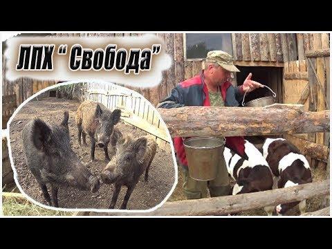 Необычная ферма Александра  /Кабаны / Деревенская жизнь