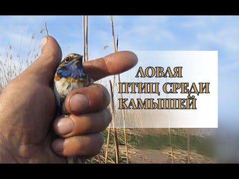 Вопрос: Яйца каких морских птиц имеют грушевидную форму, что известно?