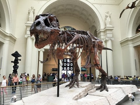 The Field Museum Chicago - 18-Jul-2016