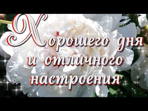 Хорошего дня и отличного настроения  Видео открытка хорошего дня