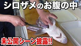 【未公開シーン】シロザメを捌いてみたら衝撃的だった!!