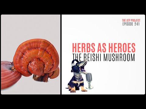 The ATP Project 241 Herbs As Heroes – the Reishi Mushroom