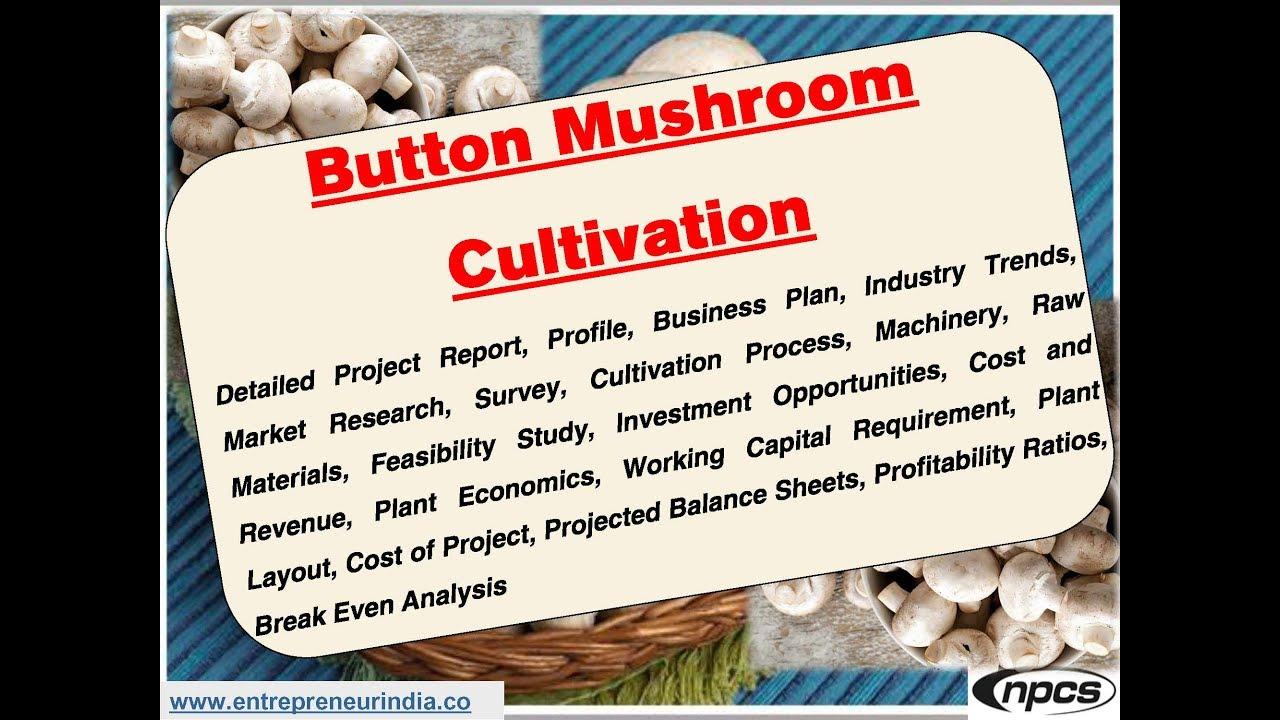 Button Mushroom Cultivation