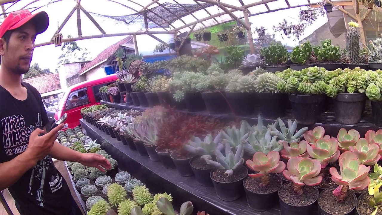 Ngintip Tanaman Hias Koleksi Kaktus Sukulen Maribaya Lembang YouTube