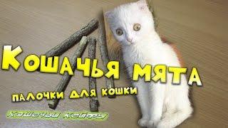Кошачья мята. Палочки для кошки с АлиЭкспресс
