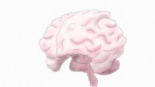 миф о полушариях мозга Ted Ed на русском