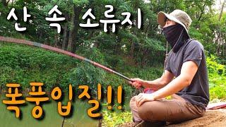 산속 소류지 폭풍입질!! 넣으면 나온다!! 대낚시 민물낚시 민물낚시 찌올림 낚시동영상 대낚시입질 대낚시 챔질 fishing