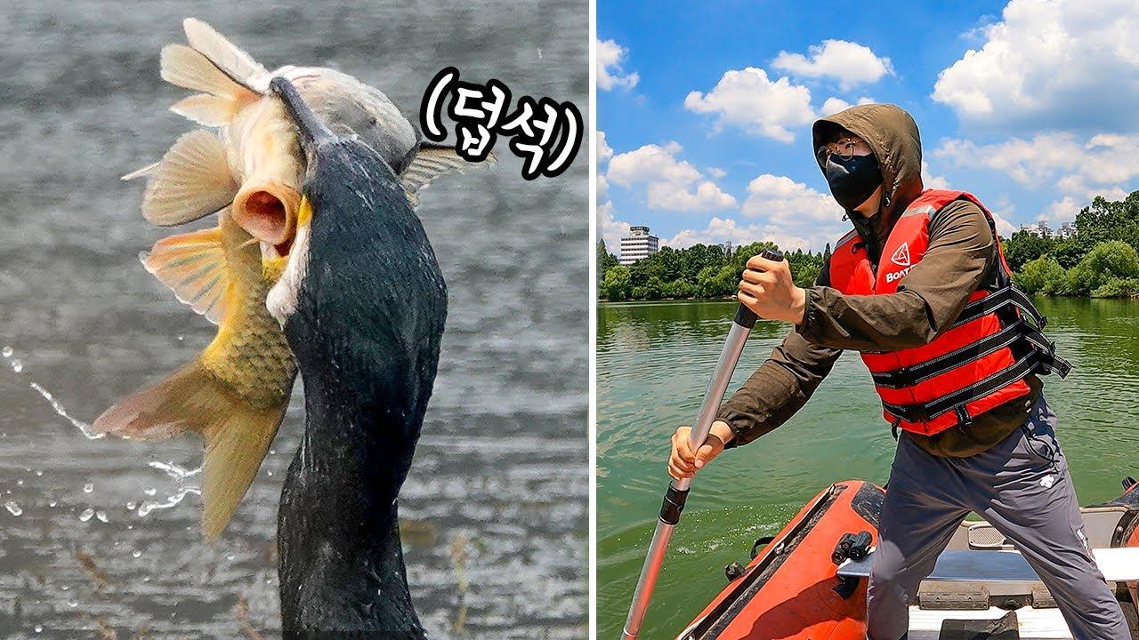 거대한 물고기도 한 입에..! 민물가마우지들이 점령한 무인도에 들어가봤습니다