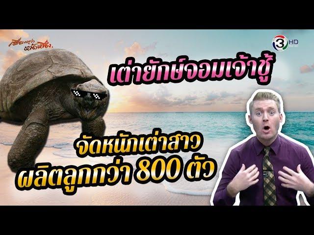 เต่ายักษ์จอมเจ้าชู้ จัดหนักเต่าสาว ผลิตลูกกว่า 800 ตัว!!