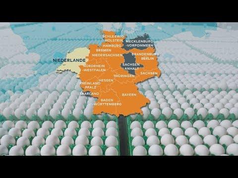 Insektifizit Fipronil: Aldi nimmt sämliche Eier aus dem Verkauf