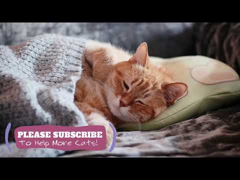 Relaxing Cat Music - 2 Hours of Feline ASMR Cat Sleep Music ☯LCZ31