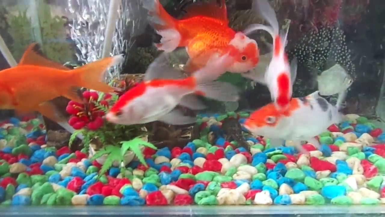 Aquarium Mini Diluar Rumah Youtube