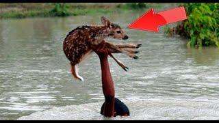 ✓ ДО СЛЕЗ !!!! Добрые  поступки людей достойные уважения!