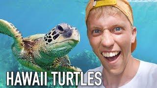 VLOG #25: SWIMMING WITH TURTLES AT WAIMEA BAY, HAWAII!