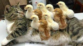 おかしい猫 - かわいい猫 - おもしろ猫動画 HD #263 https://youtu.be/C...
