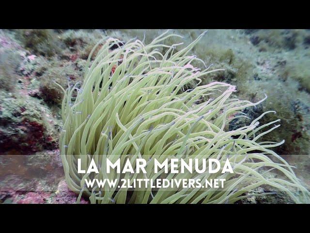 2 Little Divers | Inmersión en La Mar Menuda (Tossa de Mar)
