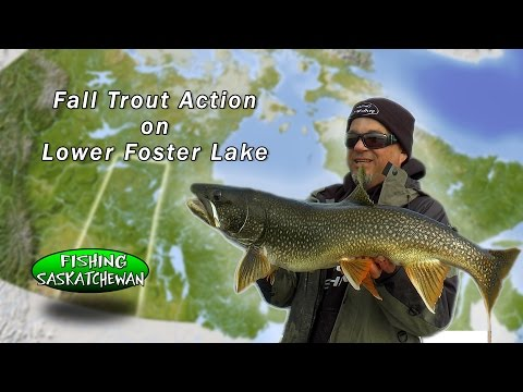 Lower Foster Lake Trout Action.