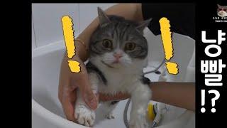 오늘은 고양이 목욕하는 날 ㅣ 냥빨day