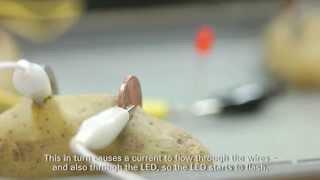 Technik für Kids: Wie baue ich eine Kartoffelbatterie?