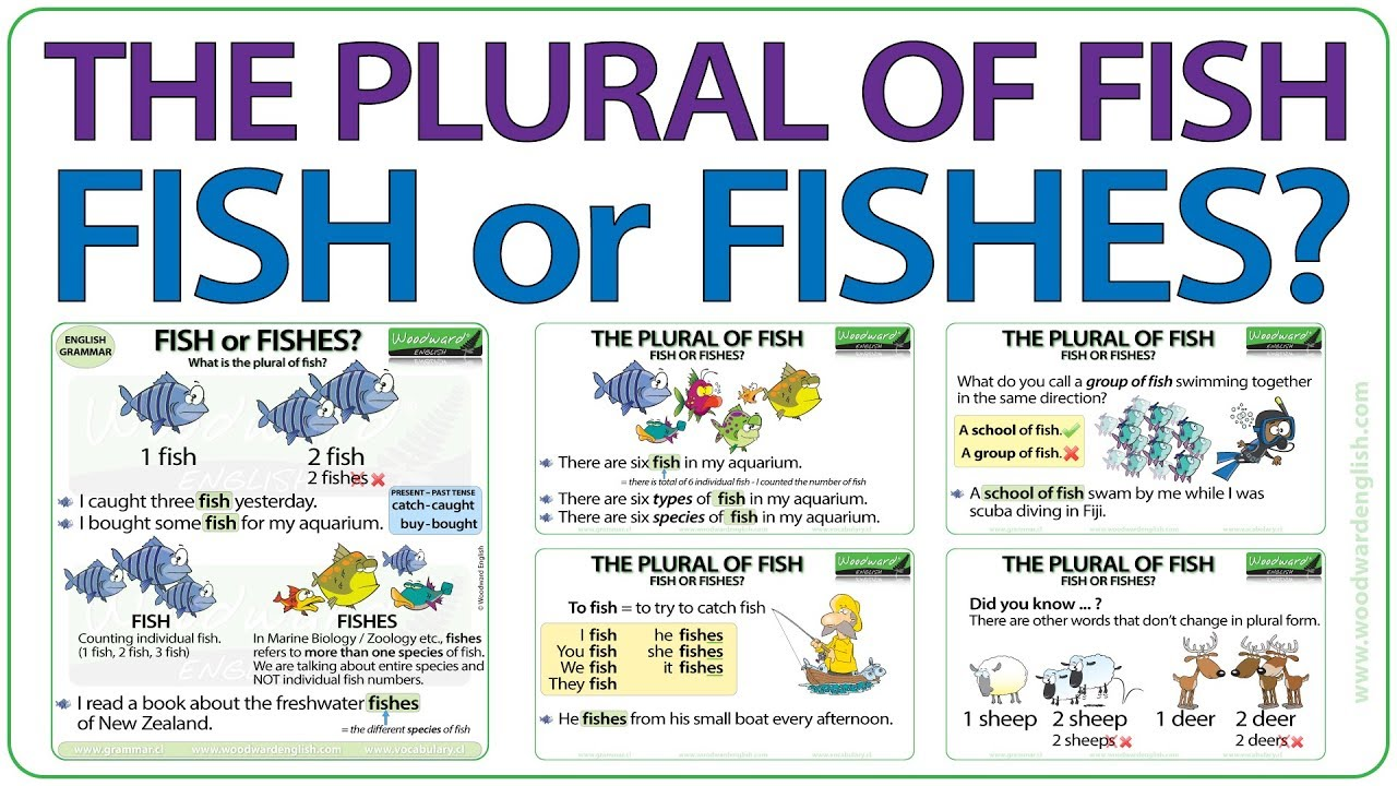 The plural of FISH - Fish or Fishes?
