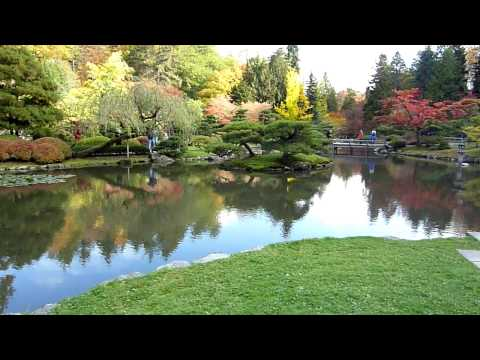 Pond at Seattle Japanese Garden