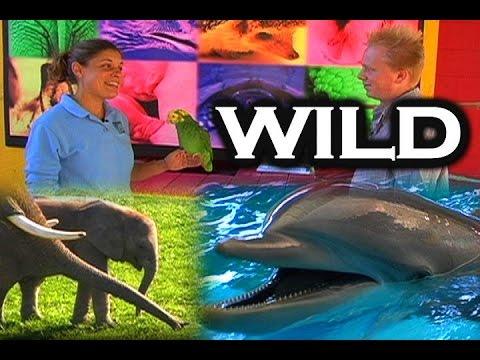Joe Gets Wild (Zoo) (Classic)
