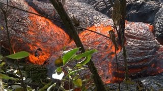 PAHOA, HAWAII - Puna Lava Flow Breakouts Near Cemetery and Transfer Station