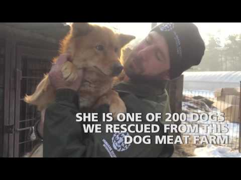 dog-meat-farm-closed-for-good