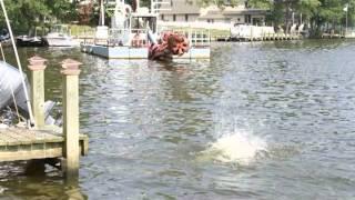 Dock Dog Training