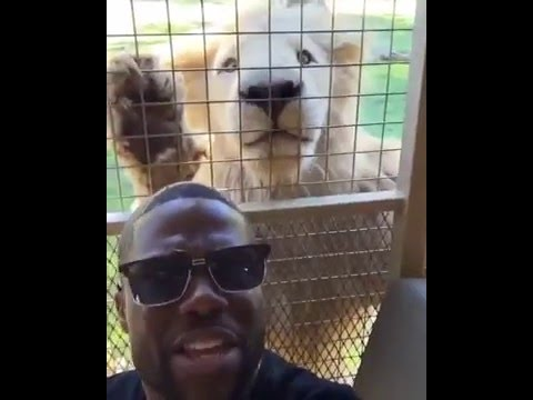 Kevin Hart South Africa Tour