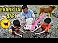 Download Ngakak 4g🤣😂😅 Prank Ember Di-isi E'ek💩 Sapi, Dipega