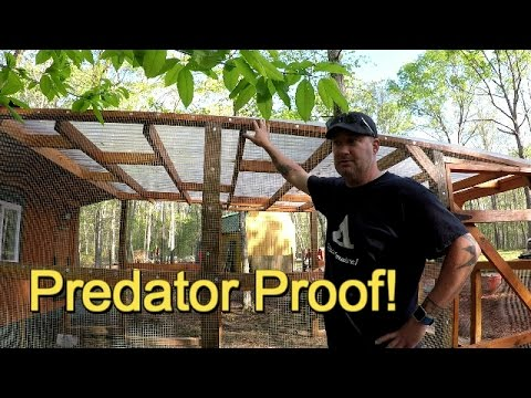 Predator proof the chicken coop!