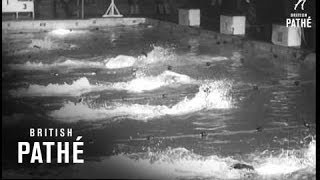 Olympic Preview - Swimmers (1956)