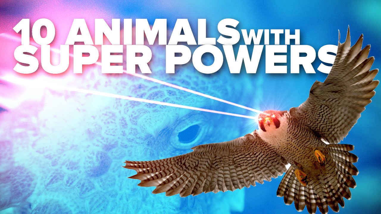 10 Animals with Real SUPER POWERS