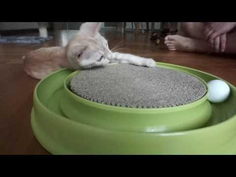 Hagen Catit Play N Scratch Cat Toy