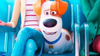 Мультфильм «Тайная жизнь домашних животных 2» — Русский трейлер [2019]