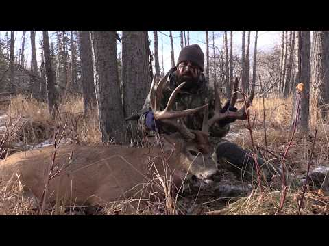 Southern Alberta Whitetail In The Rut.
