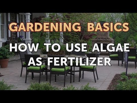 How to Use Algae As Fertilizer