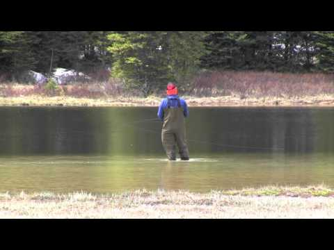 Yellowstone Fishing in the Backcountry - Brook Trout