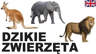 Learn Polish Vocabulary - Wild animals 1 (Dzikie zwierzęta)