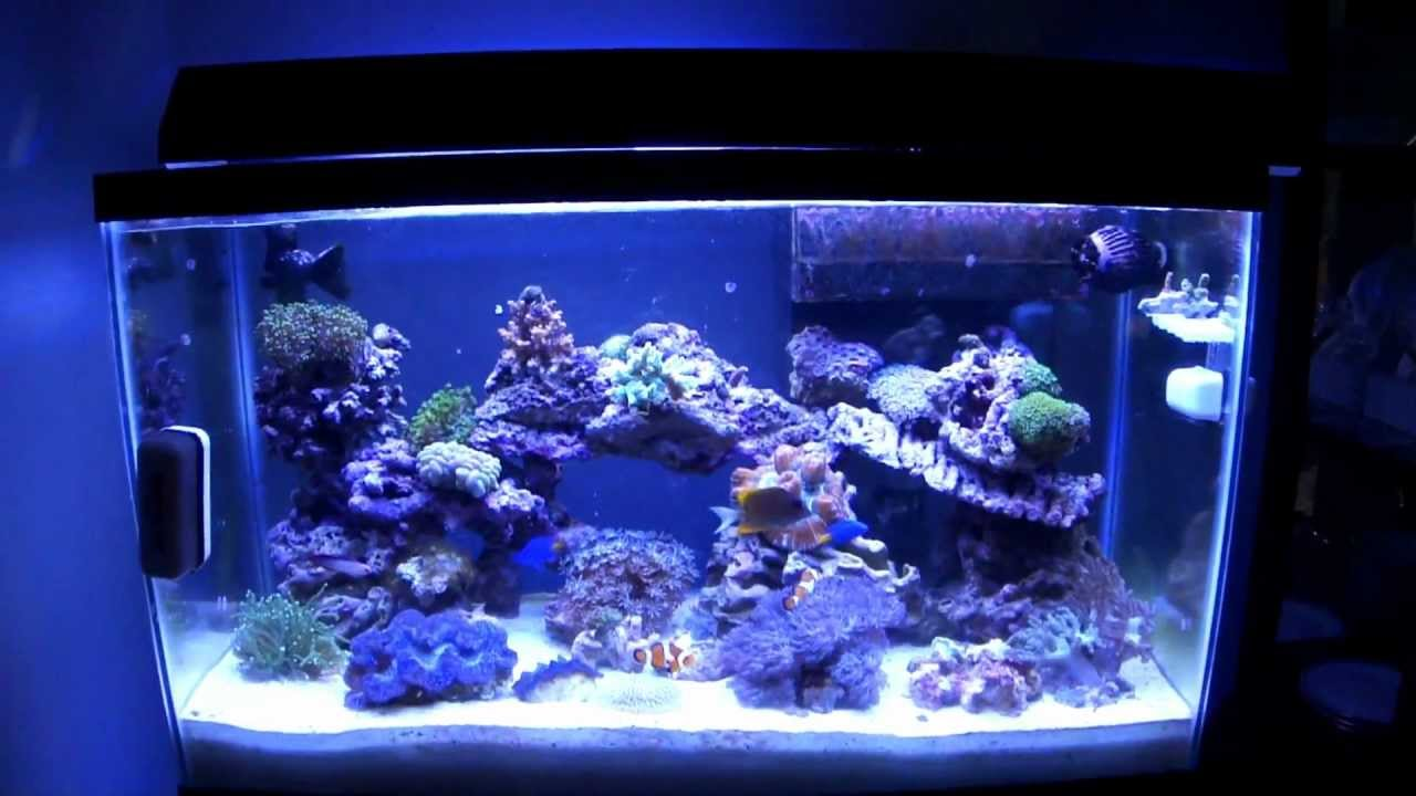 29 gallon reef update week 12 youtube for 29 gallon fish tank