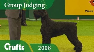 Giant Schnauzer wins the Working Group Judging at Crufts 2008 | Crufts Dog Show