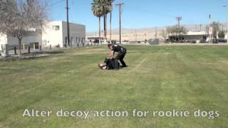 Police K9 Training With A Muzzle And Passive Decoy