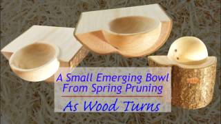 A Small Emerging Bowl From Spring Pruning