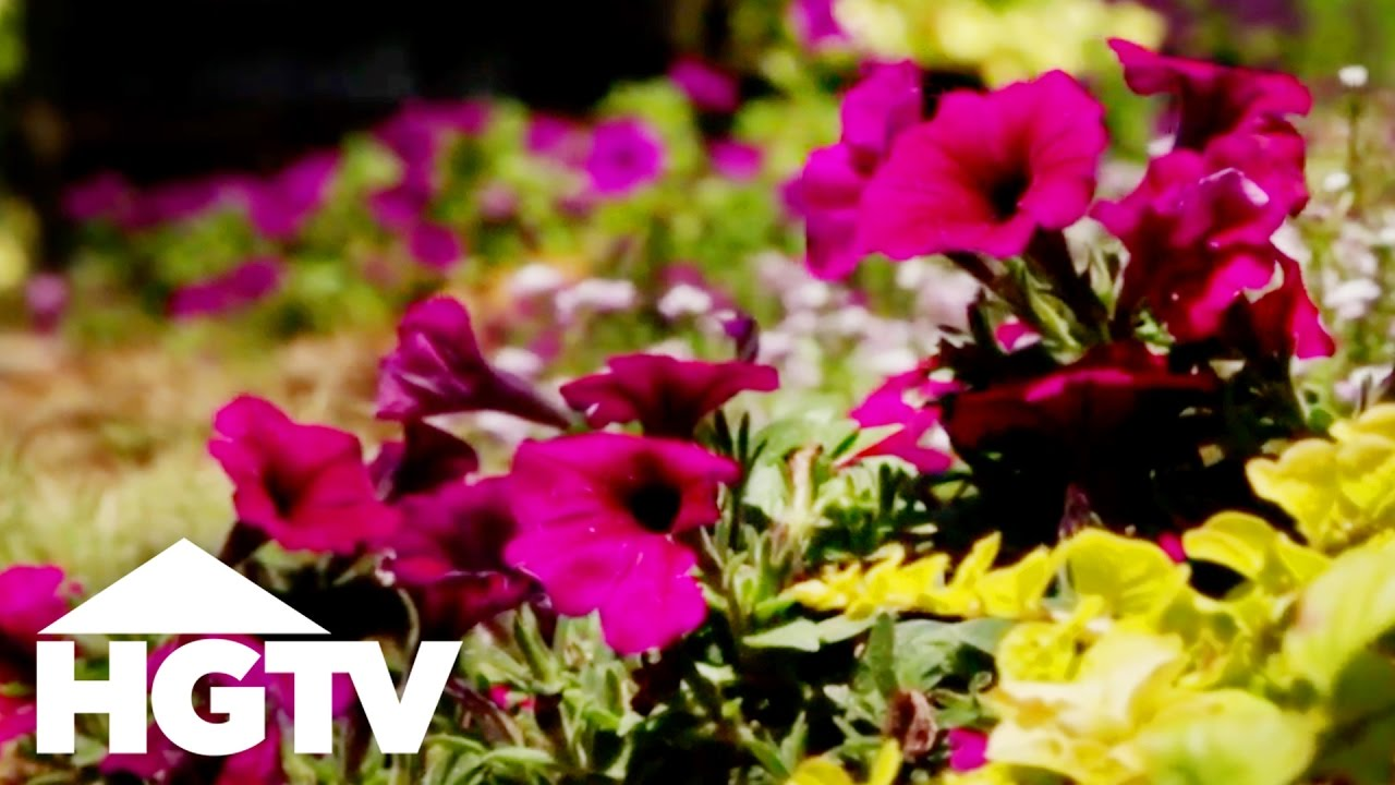 How To Plant Petunias Hgtv Gardening Youtube